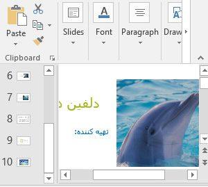 عکس پاورپوینت دلفین